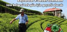 İçişleri Bakanlığı'ndan çay üreticileri için gen